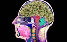 Jak regularne palenie marihuany może wpłynąć na nasze mózgi?